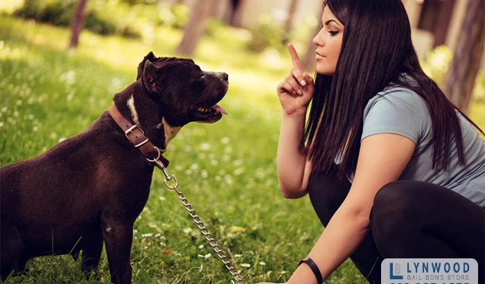 Are Dog Owners Responsible if Their Dog Bites Someone?